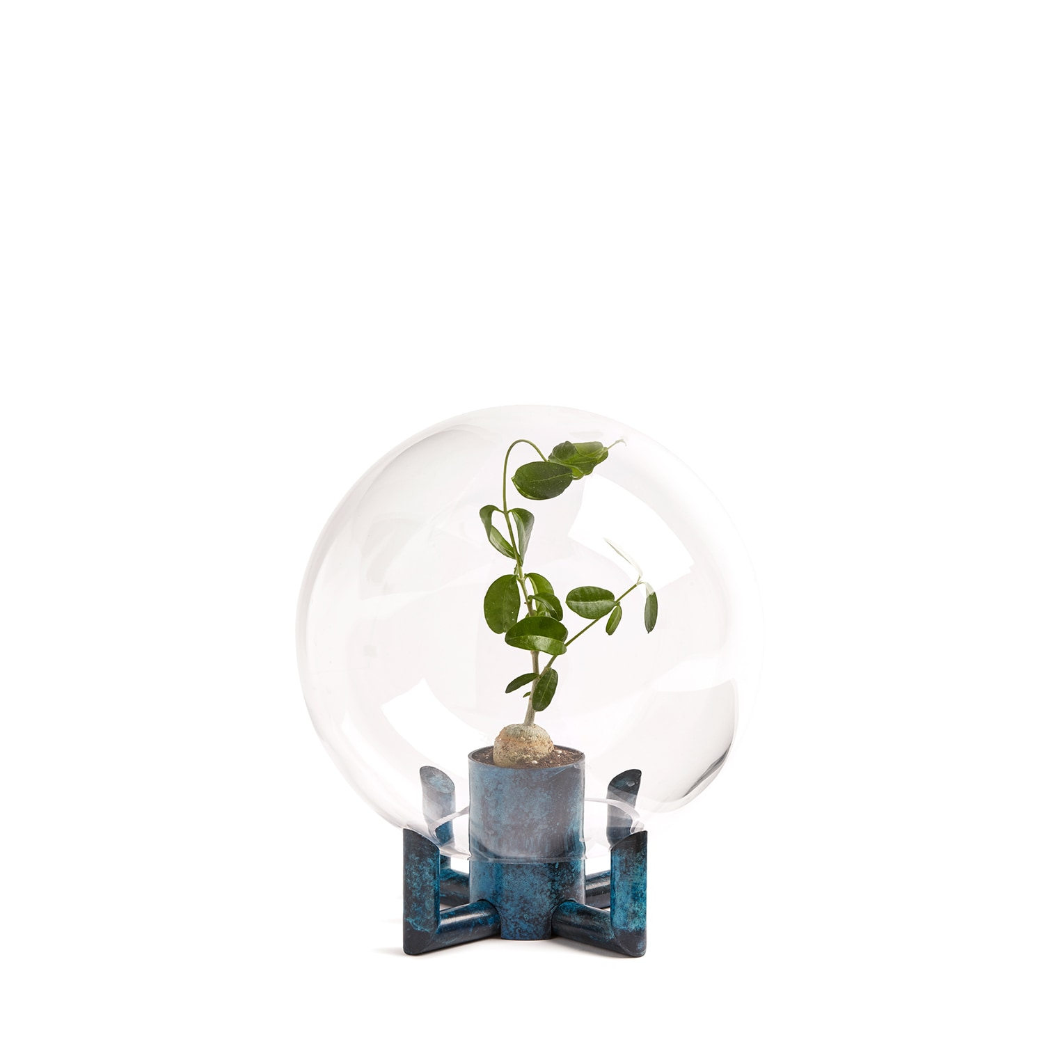 Orb Small Plant Square